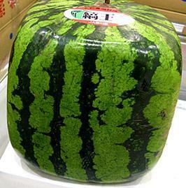 В беларуси начнут выращивать арбузы и